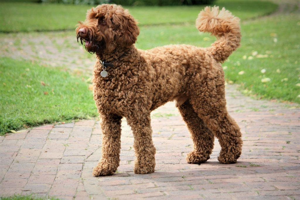 Address for professional dog training