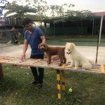 Trường huấn luyện chó cảnh, chó nghiệp vụ uy tín, chuyên nghiệp