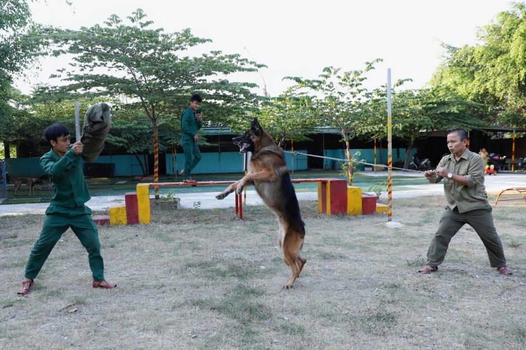Những giống chó thông minh, dũng mãnh, giữ nhà tốt nhất
