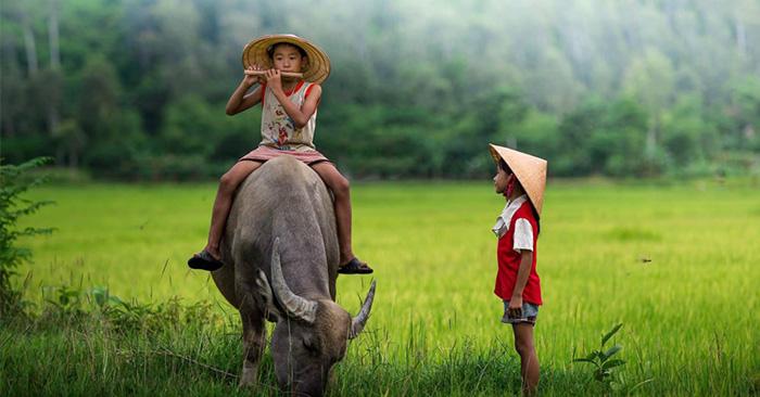 Bài văn thuyết minh về con trâu ở làng quê Việt Nam số 6